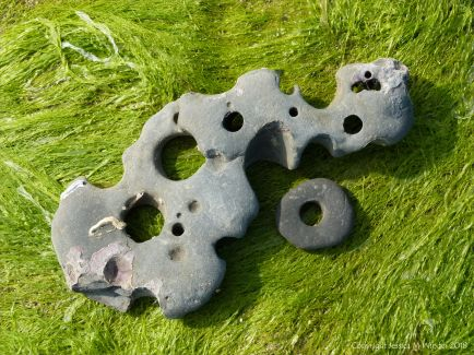 Piece of rock with holes made by seashore creatures