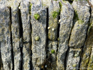 Detail of stonework on pier encrusted with barnacles and limpets