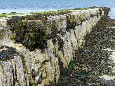 Looking seawards at the vertical east face of stonework pier at Grit Ness in Orkney