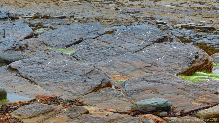 Preserved ripple marks on Upper Stromness Flagstone strata at Birsay