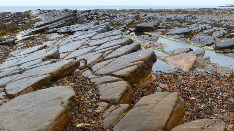 Outcropping Devonian sedimentary Upper Stromness Flagstone in Orkney