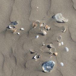 Seashells on dry beach sand