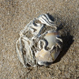 Seashell with natural encrustations on a sandy beach