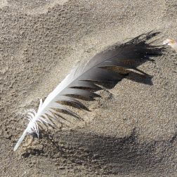 Feather on beach sand