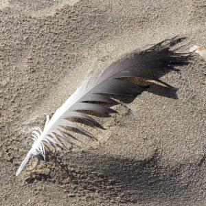 Feather on beach sand