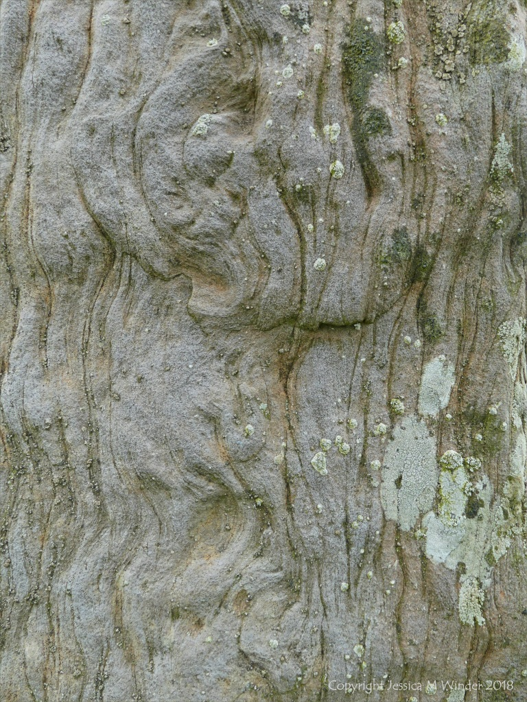 Close-up of rock texture on a Standing Stone of Stenness