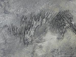 Strange markings on peat in the intertidal zone