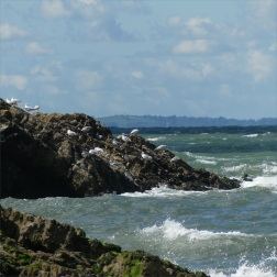 Gulls gathered on seaside rocks