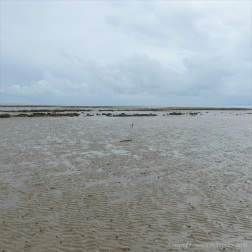 A small point of red in the low-tide mud