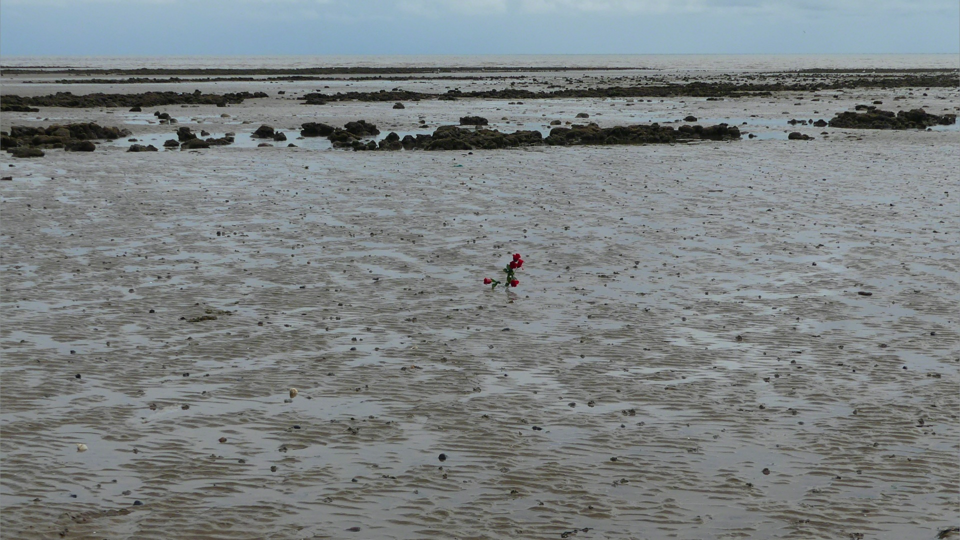 A small patch of red in the low-tide mud