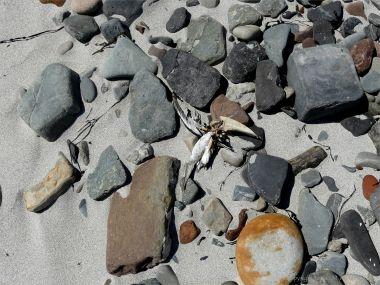 Beach stones with bird bones