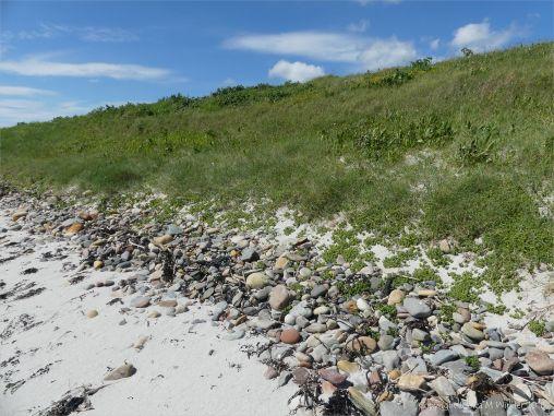 Pebble base to vegetated dunes at Newark Bay