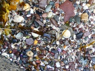 Shells, pebbles and shell sand near the slipway at Newark Bay in Orkney