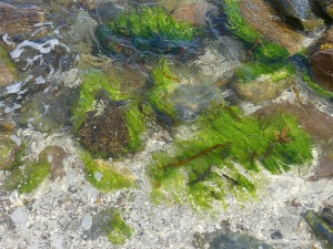 Seaweed and stones at the water's edge