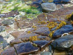Waterside rocks at Newark Bay in Orkney