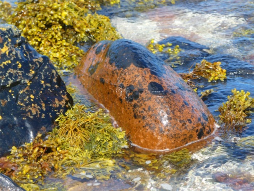 Black lichen and yellow seaweeds on orange boulders at Newark Bay