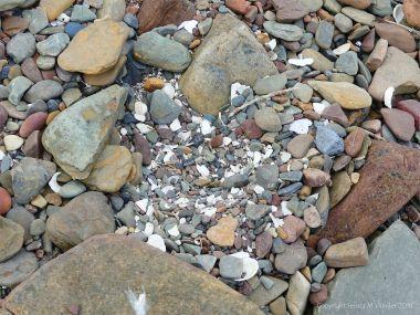 Bird nesting hollow among the pebbles on the beach