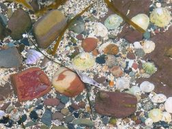 Beach stones and seashells under water