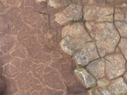 Weathered sedimentary rock texture from the Devonian Eday Group