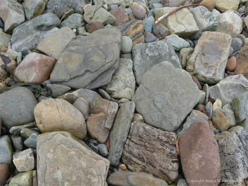 Cobble size beach stones on the west side of Newark Bay