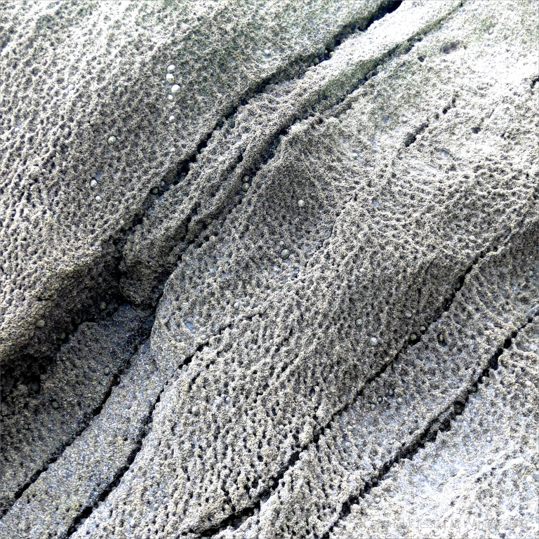 Texture in barnacle-covered rocks