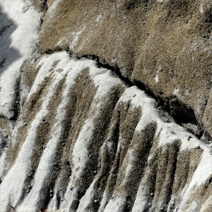 Erosion patterns on sedimentary rocks covered by barnacles