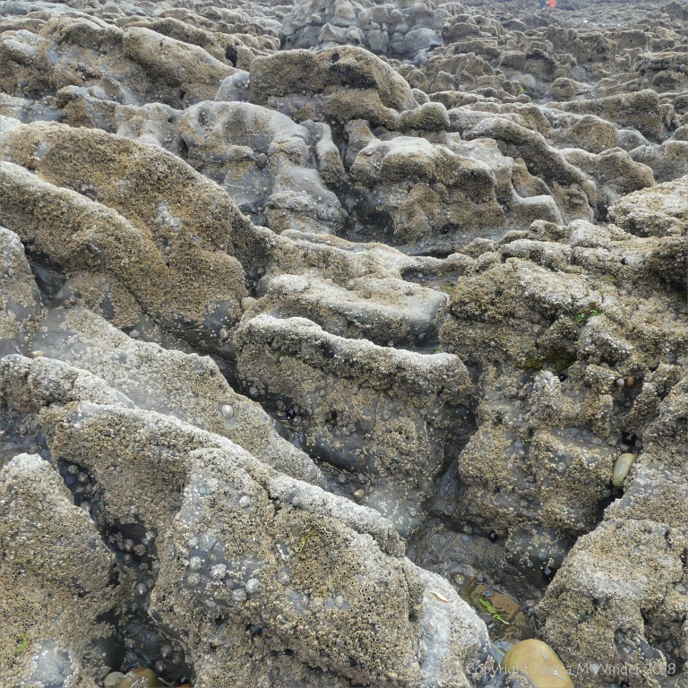 Barnacle encrusted water-worn Carboniferous Limestone ?palaeokarst surface at Caswell Bay in Gower