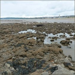 View of honeycomb reefs on Swansea Beach