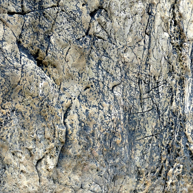 Lines of black lichen forming patterns on rock