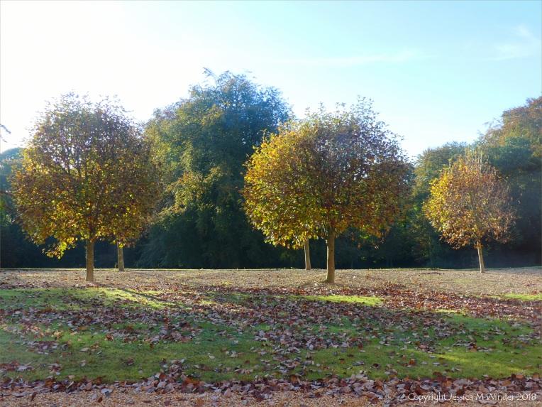 Autumn leaves on trees