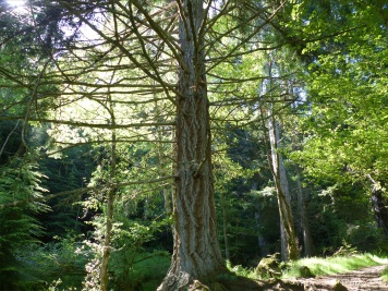 Nature along the Farigaig forest trail on the banks of Loch Ness in Scotland