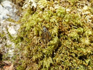 Moss on tree trunk with insect