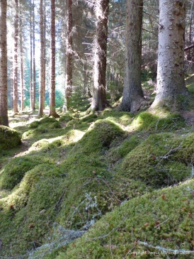 Moss-covered floor of Farigaig Forest