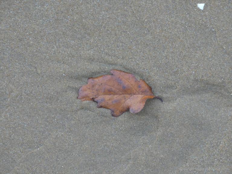 Leaf on the beach