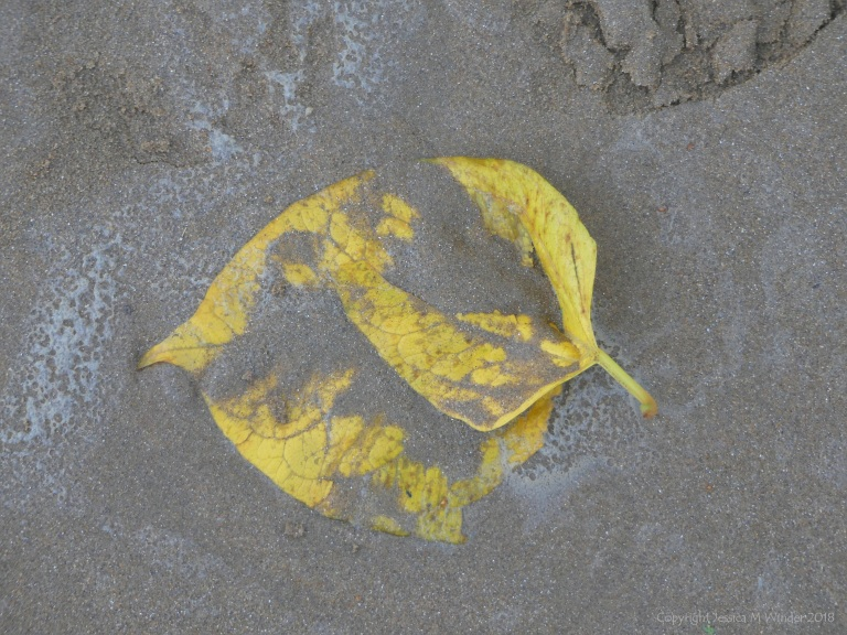 Leaf on the beach after a storm