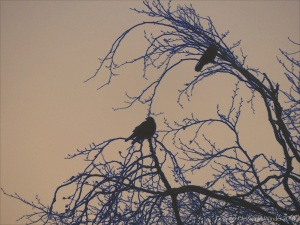 Birds on the bare branches of a tree
