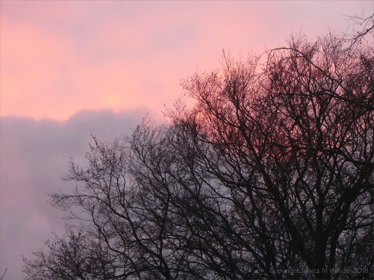 Early morning view from my window 13th December 2018