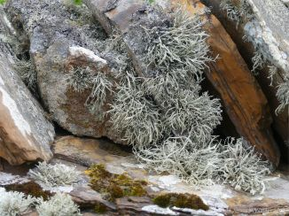 Lichen on a stone wall