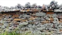 Lichen on a stone wall