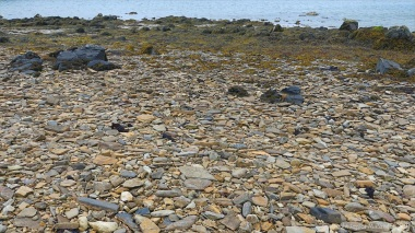 Stones on the seashore at Hamnavoe in Orkney