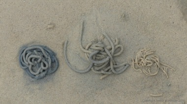 Worm casts on the seashore