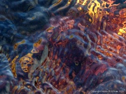 Brightly coloured seaweed beneath the waves