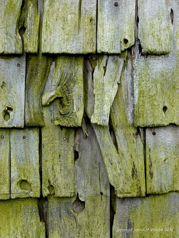 Texture and pattern in weathered wooden wall tiles in Grand Manan