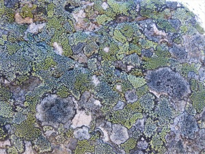 Lichen on a boulder on the bank of Loch Ness