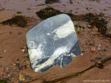 Aspects of Nature on a Scottish seashore