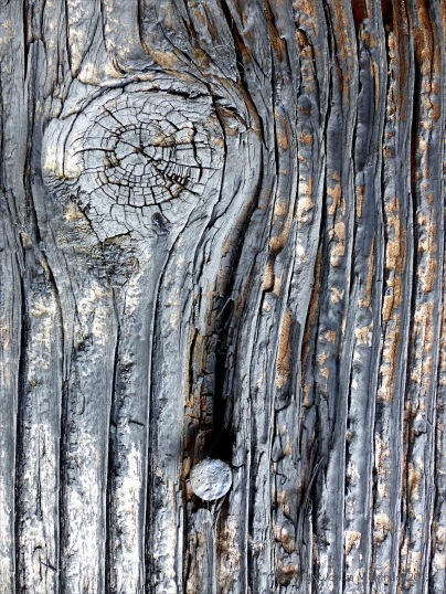 Textures produced by weathering and age on old boathouse woodwork