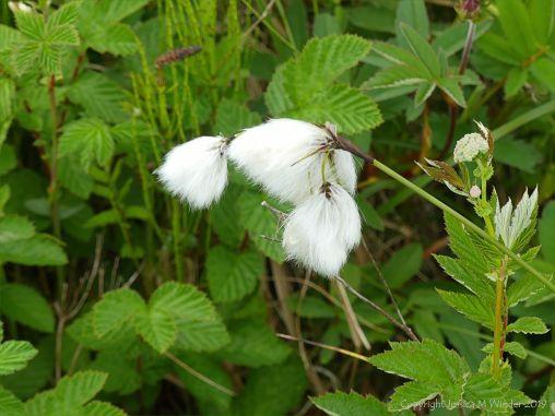 Orkney Flora 14