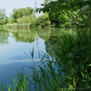 Pictures from a perfect day at Pallington Lakes