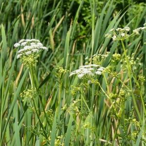 Lakeside plants