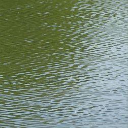 Natural water patterns